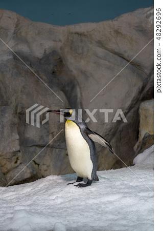 企鵝 48292696