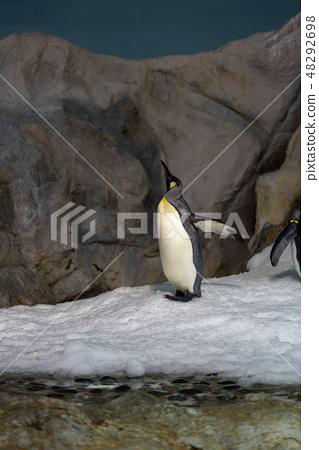 企鵝 48292698