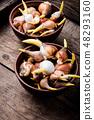 Flower bulbs on wooden background 48293160