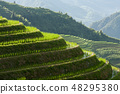 Longsheng rice terraces landscape in China 48295380