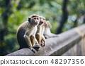 Group of cute monkeys 48297356