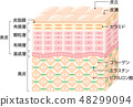 Structure cross section of skin 48299094