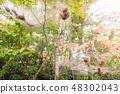 Fall webworm webbing 48302043