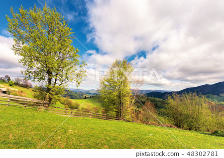 trees on the rural field in mountains 48302781