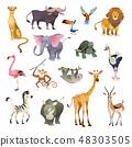 Jungle wild animals. Savannah forest animal bird safari nature africa tropical exotic forest marine 48303505