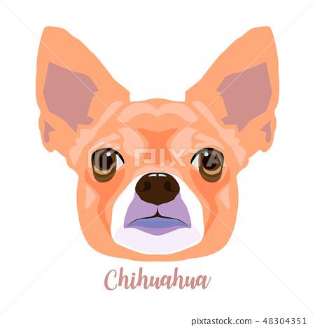 Portrait of adorable chihuahua dog head. 48304351
