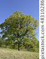 Carmen tree 48310286