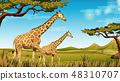 长颈鹿 非洲 野生生物 48310707