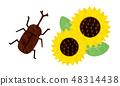 切 - 夏季材料13技術 48314438