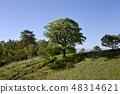 Carmen tree 48314621