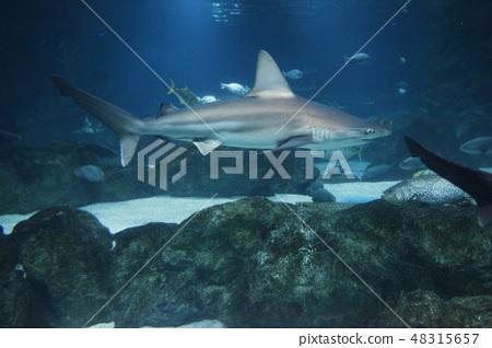 aquarium 48315657