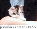 小猫是小猫 48319777