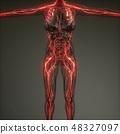 Human Neurology System Radiology Exam 48327097