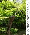 初夏令人眼花繚亂的新鮮綠色 48327801