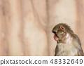 원숭이 48332649