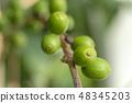 커피 콩 48345203