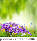 Green nature background with crocus 48350863
