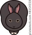 กระต่าย 48354559