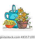 Summer still life with flowers and watering can 48357100