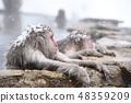 온천에 잠기 원숭이 스노우 몽키 48359209