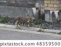 แมวกำลังเดิน 48359500