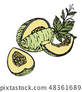 Hand drawn sketch style melon illustrations isolated on white background. Fresh food illustration. 48361689