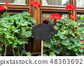 Empty wooden signboard pig shap and begonia 48363692