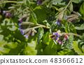 花朵 花 花卉 48366612