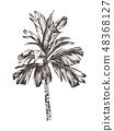 Vector Illustration of palm tree sketch for design, website, background, banner. Hand Drawing floral 48368127