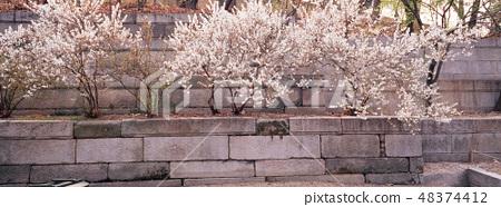 창경궁,종로구,서울 48374412