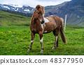 สัตว์,สัตว์ต่างๆ,เหมือนม้า, 48377950