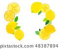 펠트 감귤류 레몬 콜라주 48387894