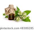 leaf, herb, medicine 48389285