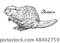 River beaver, Wild animal. Symbol of the north and the forest. Vintage monochrome style. Mammal in 48402759