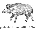 Wild boar, pig or swine, forest animal. Symbol of the north. Vintage monochrome style. Mammal in 48402762