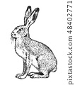 Wild Gray hare, forest animal. Vintage monochrome style. Mammal in Europe. Engraved hand drawn 48402771