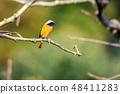 野鸟 48411283