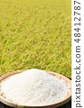 Autumn rice field and bowls 48412787