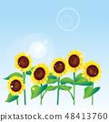 Sunflower and sky 48413760