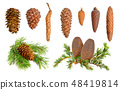Coniferous cones collection 48419814