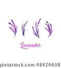 Watercolor or Aquarelle Paintings of Lavender Vector 48426608