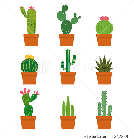 Cactus plant collections vector set 48428599