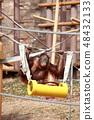 아이의 오랑우탄 놀이 48432133