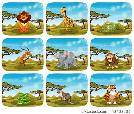 Set of different animals in scenes 48438383