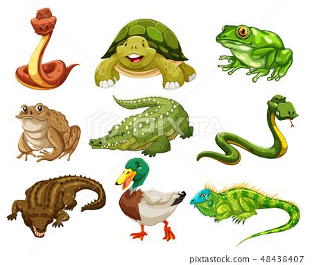 Set of isolated animals 48438407