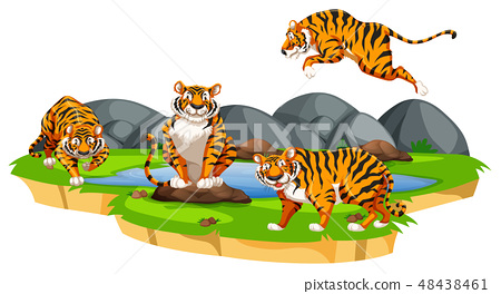 Isolated tiger in nature 48438461