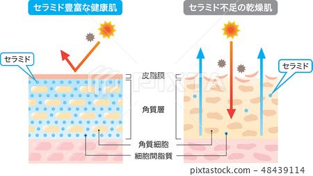 Ceramide healthy dry skin dry skin 48439114