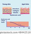 皮肤 肌肤 结构 48442516