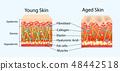 皮肤 肌肤 结构 48442518