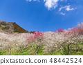 Kinoshitawa Bairin 48442524